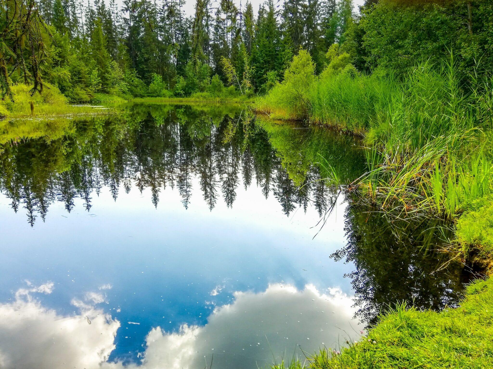 Ein See umgeben von Wäldern. Beim Waldbaden sieht man manch schönes Bild und das Bild zeigt: Grün ist nicht gleich grün