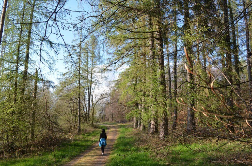 Langsames Schlendern im Wald. Ein wichtiger Bestandteil des Waldbadens