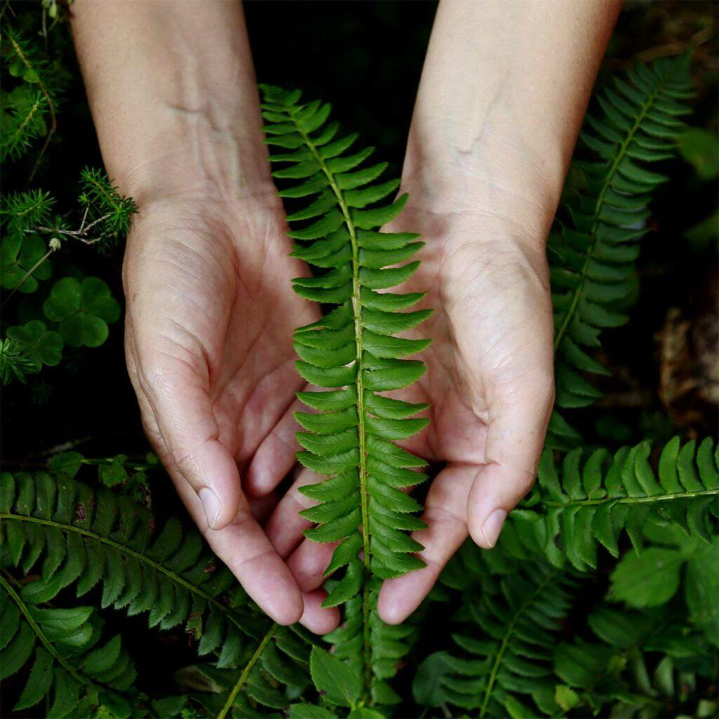 Ein Farn in der Hand. Beim Waldbaden tauchst du mit allen Sinnen in die Natur ein